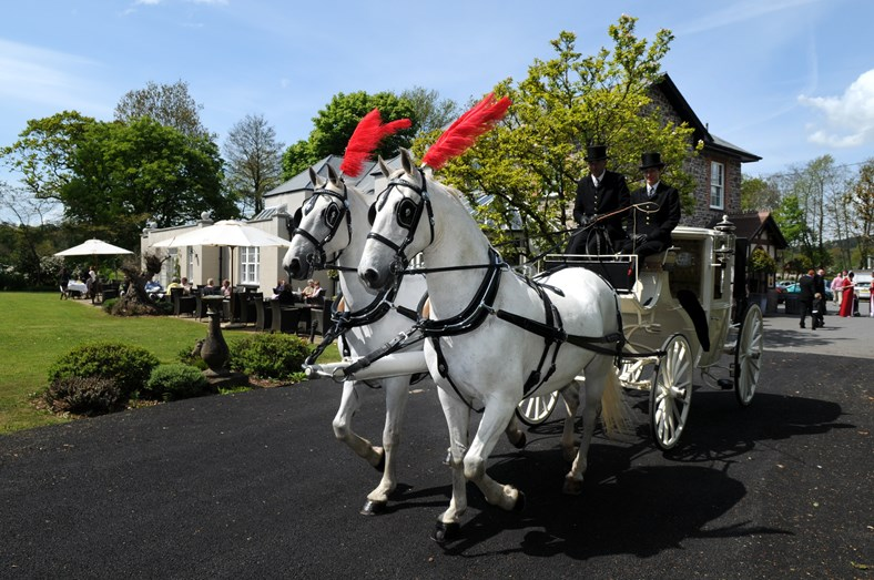wedding horses with red feathers.JPG